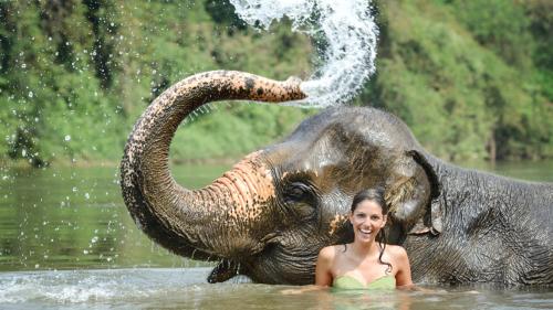 baignade éléphant
