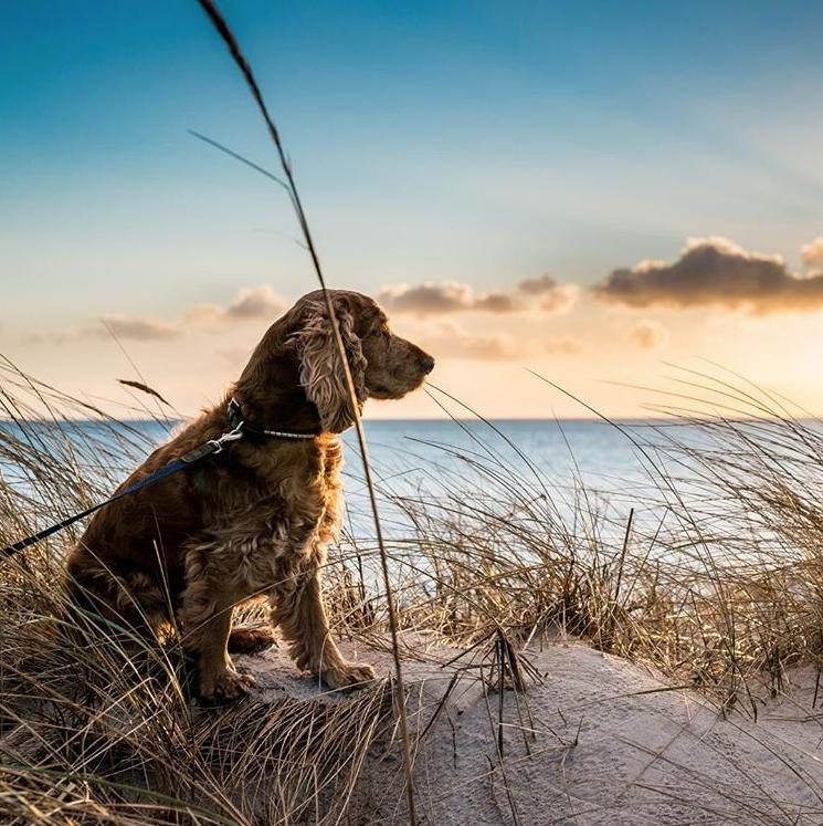 site-nomador-chien-plage