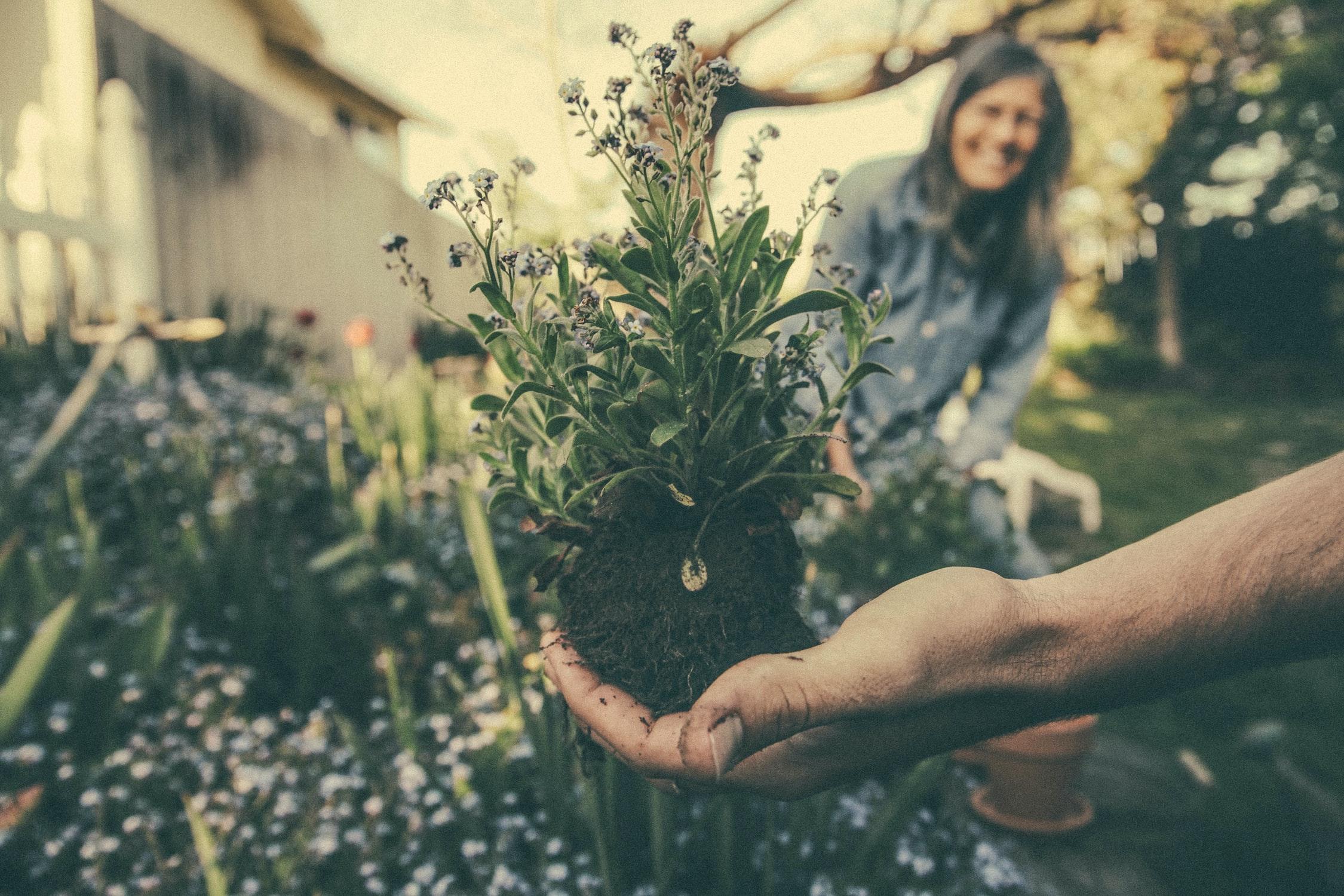 jardin-plante-troc